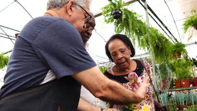 äldre afrikanska par kunden köper på blomstermarknaden - blomstermarknad bildbanksvideor och videomaterial från bakom kulisserna