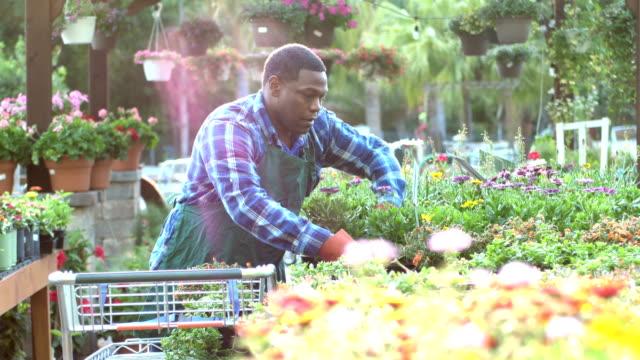 reife afrikanisch-amerikanischer mann arbeitet in gärtnerei - gewächshäuser stock-videos und b-roll-filmmaterial