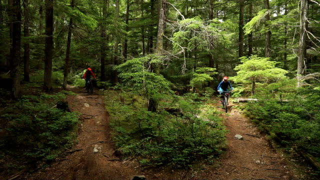 mature couple arrive at a fork in the trail and discuss way finding. - percorso per bicicletta video stock e b–roll