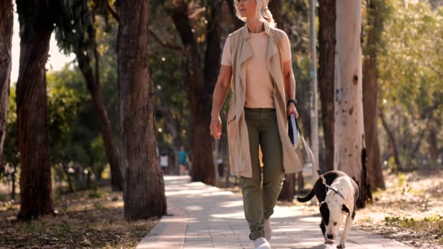 Mature female dog walker walking dog in the countryside Happy fashionable senior woman walking with dog in park in the afternoon natural parkland stock videos & royalty-free footage