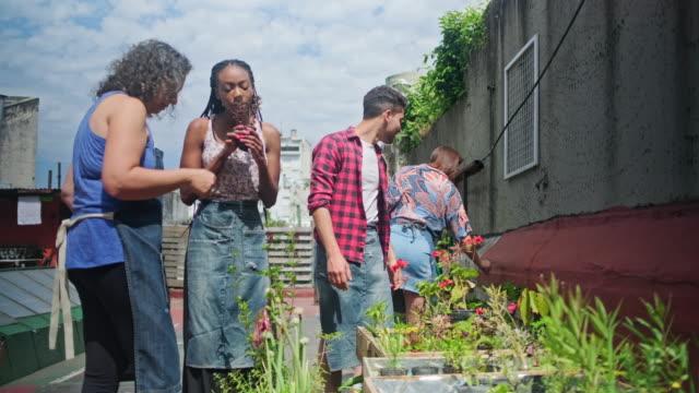 reife hispanische gärtner erziehung junge gemeinschaft mitglieder - dachgarten videos stock-videos und b-roll-filmmaterial