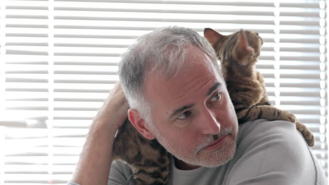 Mature Man Stroking His Cat Relaxing on His Shoulder Indoors at Home video