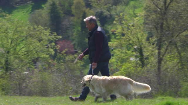 reifer mann nimmt hund spaziergang im lande schüsse aufs r3d - hundesitter stock-videos und b-roll-filmmaterial
