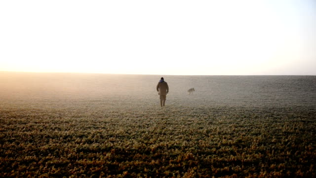 Mature man walking his dog on a beautiful fall morning A mature man walks his German Shepherd dog on a beautiful morning in the fall.  He is walking across rural farm fields in a low atmospheric mist. ontario canada stock videos & royalty-free footage