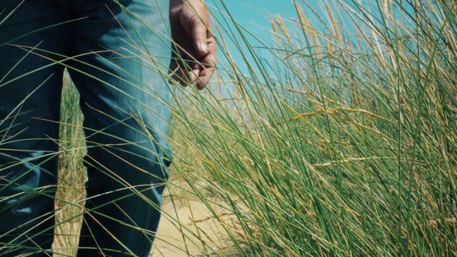 Mature man walking through long Marram grass.