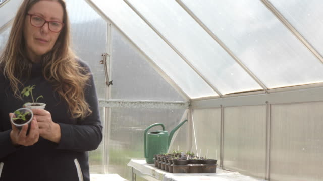 Mature Woman Holding Tomato Seedling in Front of the Camera in Greenhouse