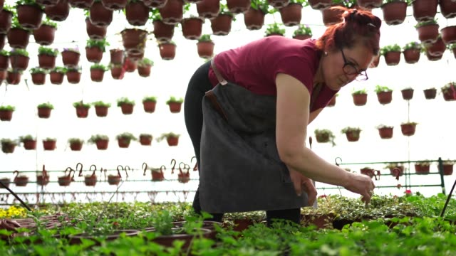 vídeos de stock e filmes b-roll de mature woman in flower greenhouse - avental