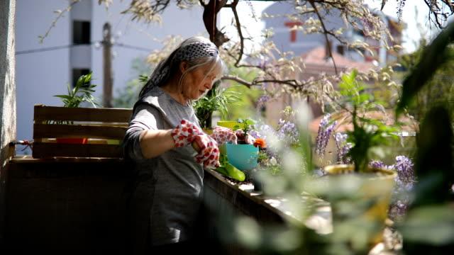 mature woman on terrace is potting flowers - terrazza video stock e b–roll
