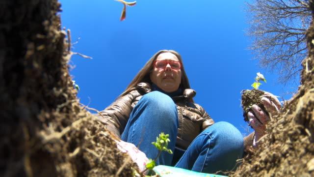 donna matura che pianta una piantina di pomodoro in giardino - foro video stock e b–roll
