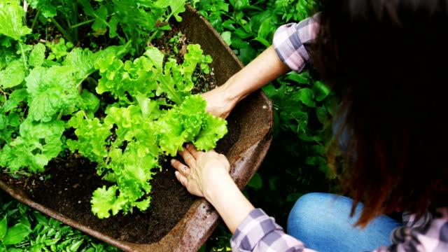vídeos y material grabado en eventos de stock de mujer madura de plantación en el jardín 4k - jardinería
