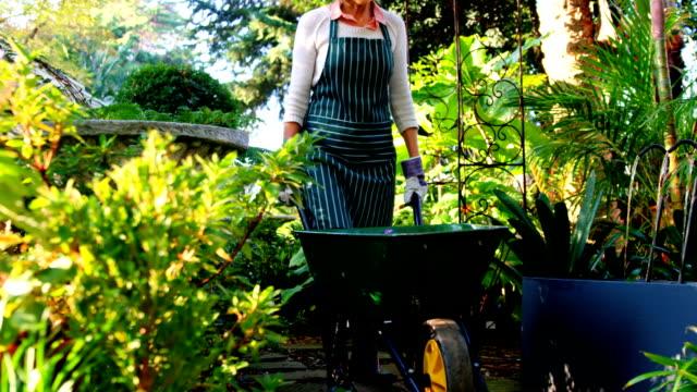 olgun kadın bir el arabası itme - bahçe ekipmanları stok videoları ve detay görüntü çekimi