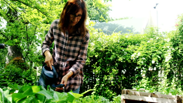 Mature woman watering plants in the garden 4k Mature woman watering plants in the garden on a sunny day 4k watering stock videos & royalty-free footage