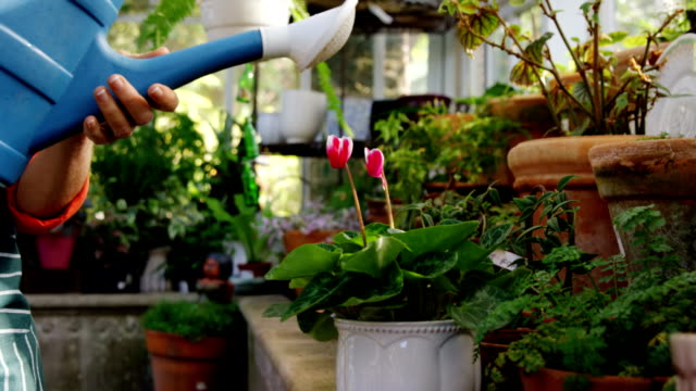 Mature woman watering pot plant Mature woman watering pot plant in greenhouse potted plant stock videos & royalty-free footage