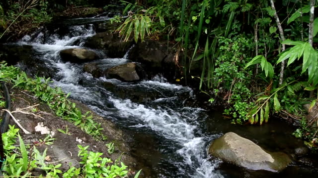 Maui Hawaii Stream video