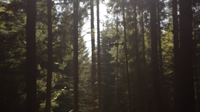 slow motion: dji mavic drone hovering in forest dusty sunlight - центральная европа стоковые видео и кадры b-roll