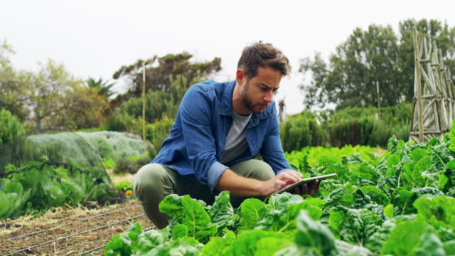 maximizing his yields with mobile apps - sustainable living stock videos & royalty-free footage