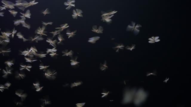 Mayfly play the light video