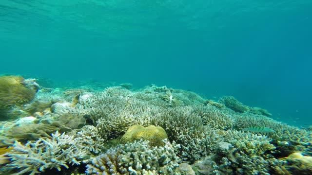 マヨットサンゴ礁 - 海洋生物点の映像素材/bロール