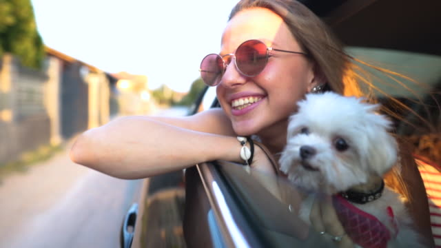 Me and my little friend on an adventure Woman riding in a car with her dog looking through the window purebred dog stock videos & royalty-free footage