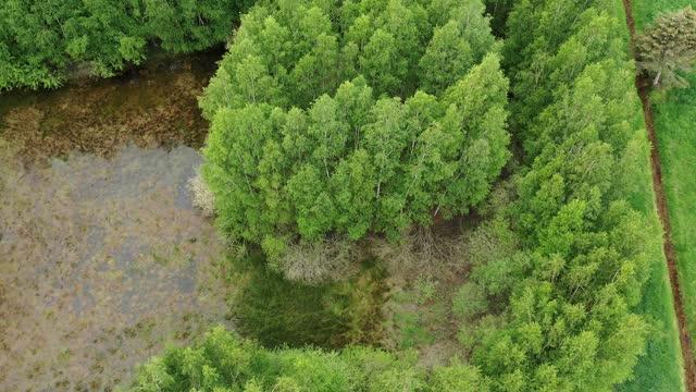 wiesenfläche mit teich, der mit alten wasserpflanzen und algen bedeckt ist und zu verschlammen droht, luftbild - aerial view soil germany stock-videos und b-roll-filmmaterial