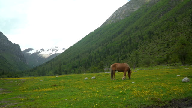 Meadow field with brown horse at Changping Gou Valley or Changping Valley, Siguniangshan National Park, Sichuan Province, China