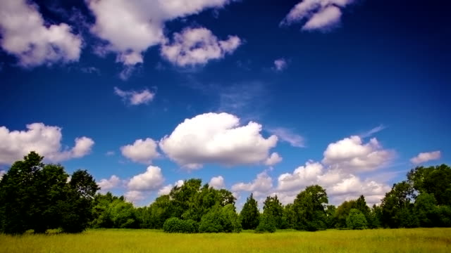 Meadow, forest and sky. video