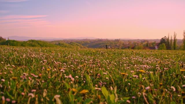 meadow pieno di fiori selvatici - paesaggio collinare video stock e b–roll