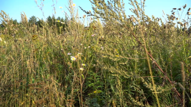 meadow grass in the early autumn video