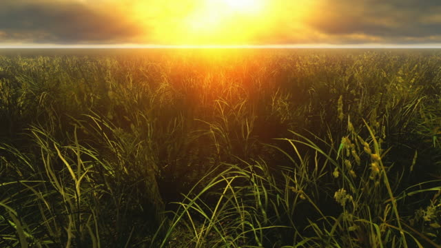 Meadow grass  grass area stock videos & royalty-free footage