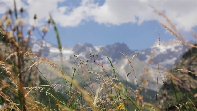 meadow herbs sway at mountain background rack focus view from below. wild flowers weed grass in motion at snow-capped peaks of mont blanc alps range in summer windy day with construction crane at foot - courmayeur estate video stock e b–roll