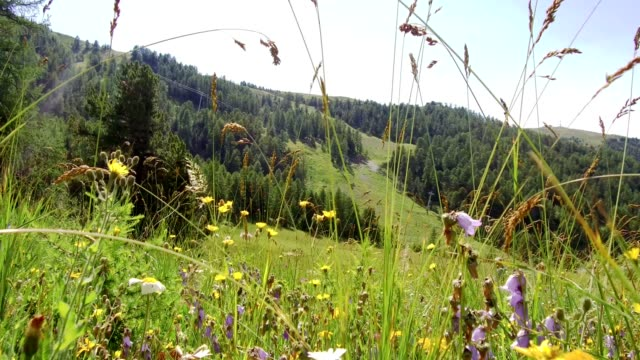 meadow in bloom in french alps - hautes alpes stock videos & royalty-free footage