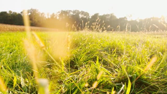 SLO MO Meadow In The Sun video