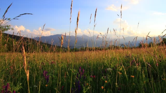 meadow of flowers and grass in summer and pyrenean landscape at sunset,  France meadow of flowers and grass in summer and pyrenean landscape at sunset, Occitanie in the south of France prairie stock videos & royalty-free footage