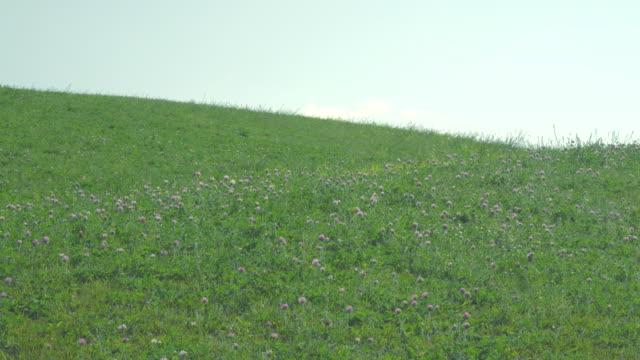Meadow on a hillside in early summer video