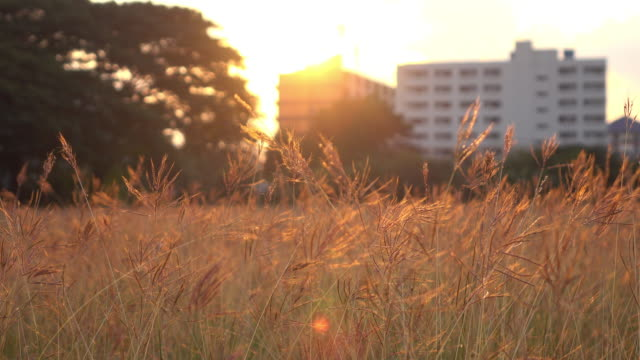 meadow summer with sunlight sunset sky in the city video