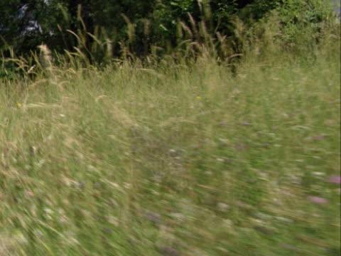 meadow  - pflanzenbestandteile stock-videos und b-roll-filmmaterial