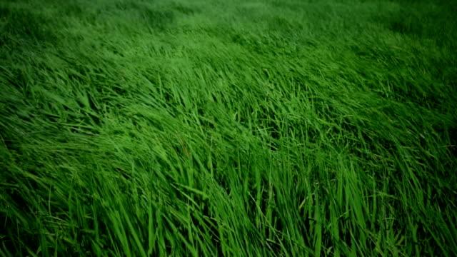 Meadow video
