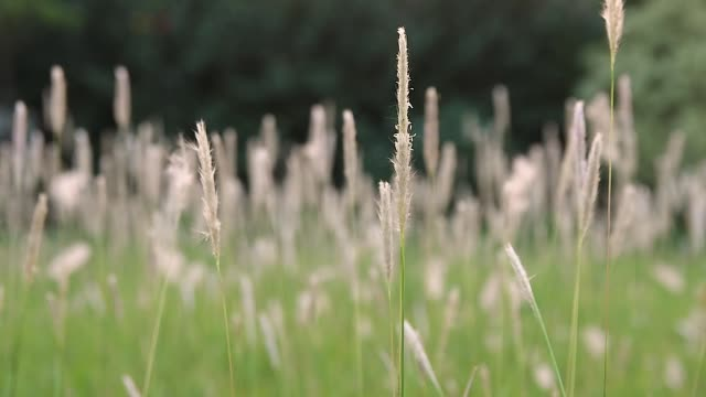 Meadow Meadow blade of grass stock videos & royalty-free footage