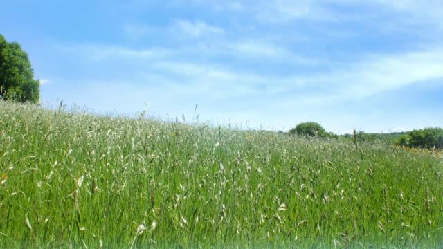 vídeos de stock e filmes b-roll de meadow with blue sky. - prado