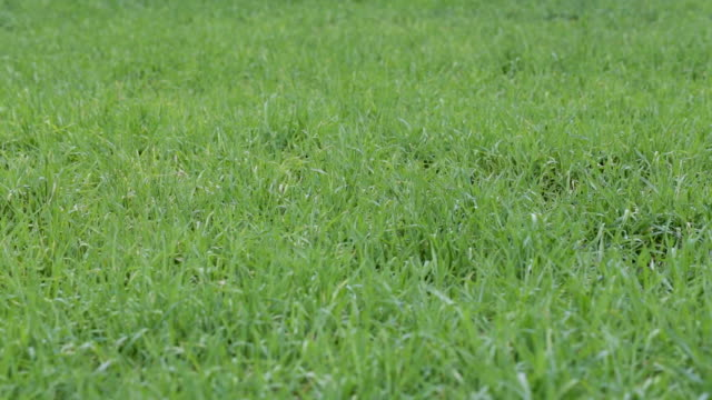 meadow with green grass video