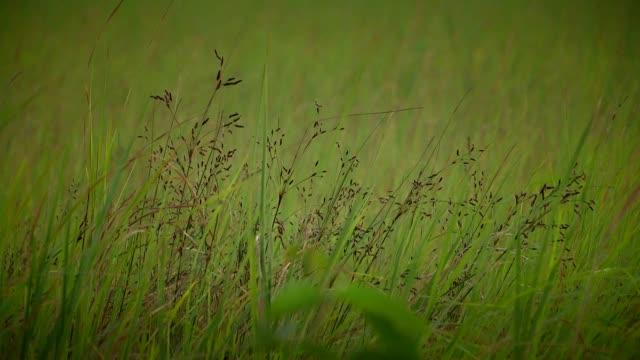 Meadows video
