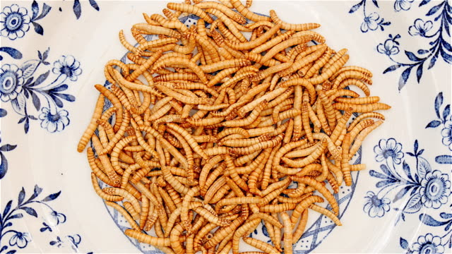 Mealworms rotating blue white dish video