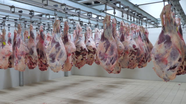 meat cutting and processing factory, supervising and expert engineer control. meat cutting and processing factory, supervising and expert engineer control. freezer stock videos & royalty-free footage