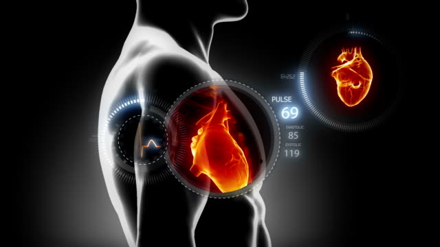 Medical concept - Human heart EKG diagram with x-ray heart human heart stock videos & royalty-free footage