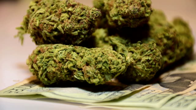 Medical Healthcare Industry Legalization Natural Herbal Remedy Money Grows on Trees 20 Dollar Bill Currency Healthcare Legalization Recreational Cannabis Tax video