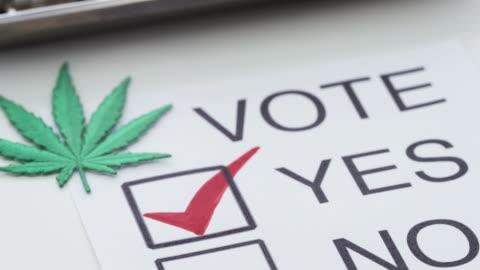 vídeos de stock e filmes b-roll de medical marijuana legalization america - erva
