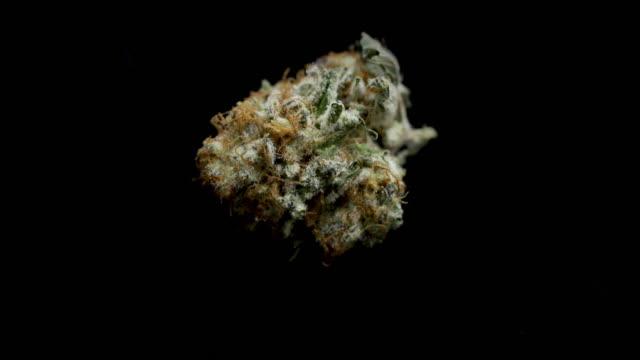 medicinsk marijuana - hasch bildbanksvideor och videomaterial från bakom kulisserna