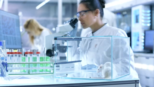 medical research scientist examines laboratory mice and looks on tissue samples under microscope. she works in a light laboratory. - mouse video stock e b–roll