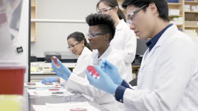 medicinsk forskargrupp analysera prover i ett laboratorium - medicinskt stickprov bildbanksvideor och videomaterial från bakom kulisserna