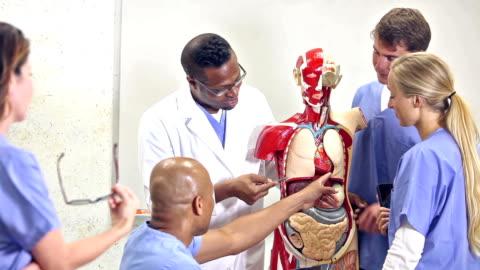 studenti di medicina in classe di anatomia con istruttore - biologia video stock e b–roll
